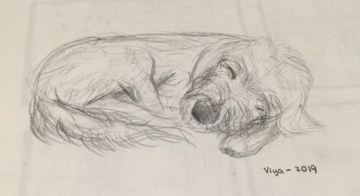 My granddaughter Tara is fast improving her painting skills. This is her free hand sketch of her dog Via as in the photo.